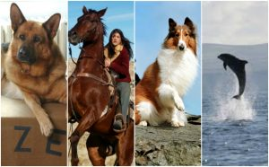 9 Serie Tv da guardare se ami gli animali