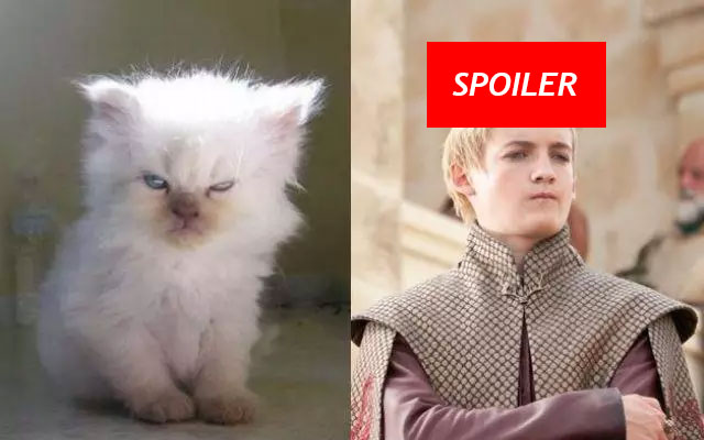 Gatto Joffrey Game of Thrones