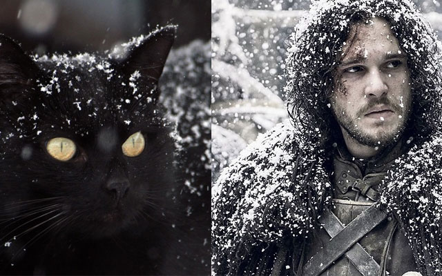 gatto Jon Snow