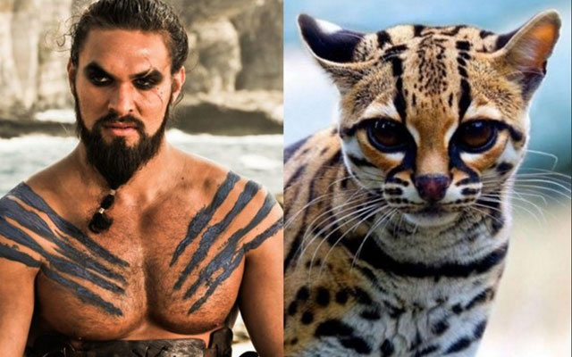 Gatto Khal Drogo Game of Thrones