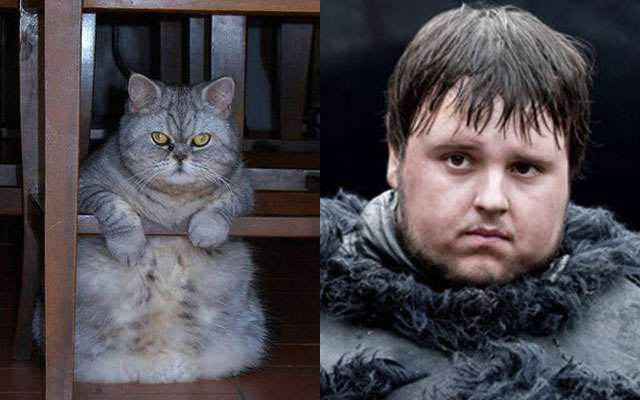 gatto Sam Tarly Game of Thrones