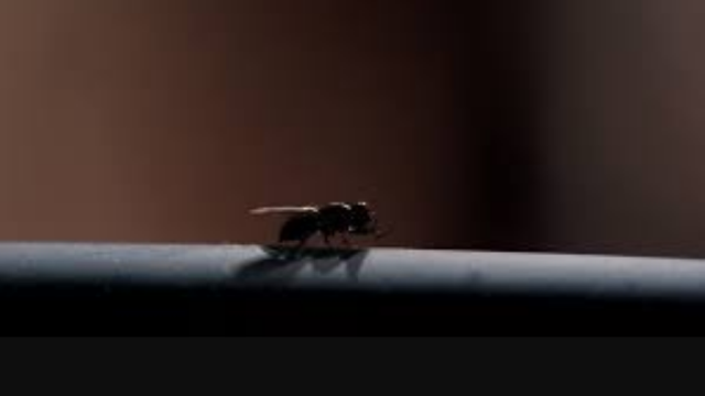 breaking bad fly mosca